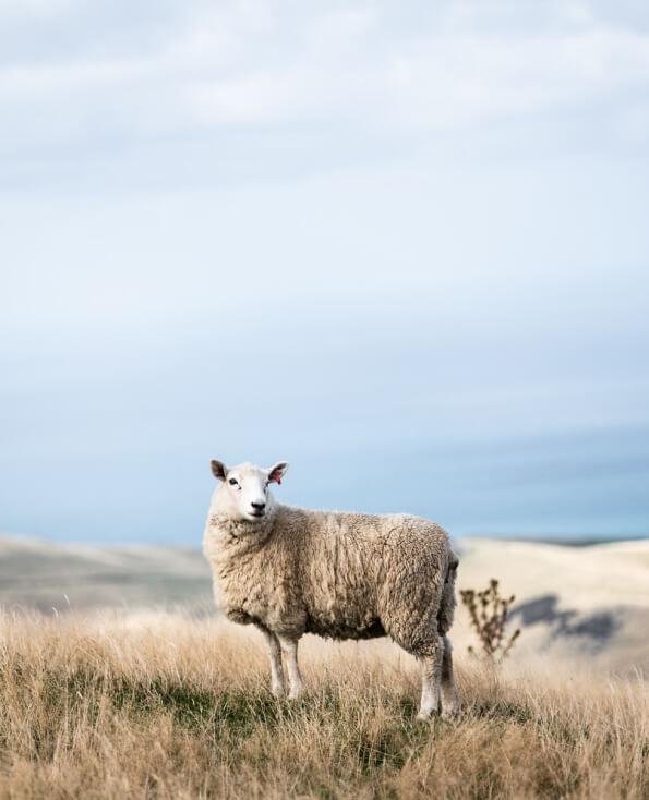Fair Treatment Wool