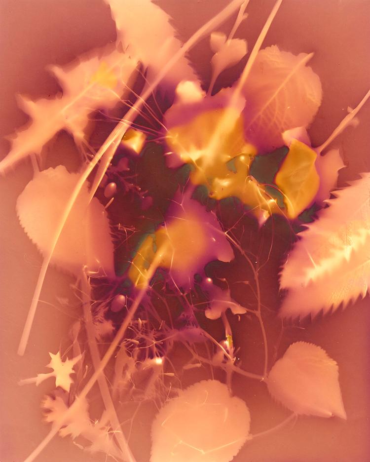 Doherty - Forest Lumen I