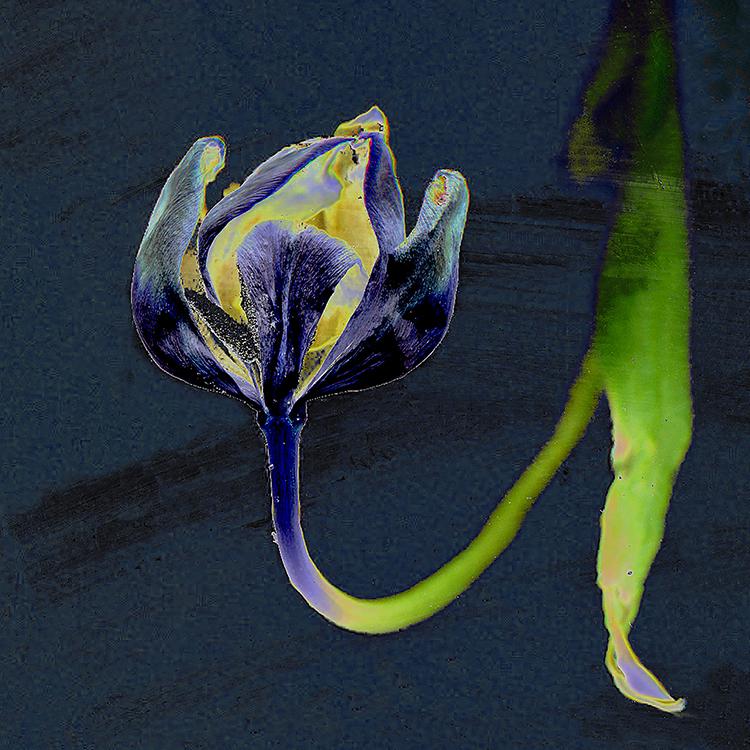Flowering Tail