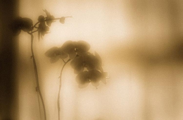 Orchid Pinhole