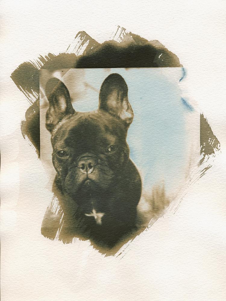 Bulldog Cyanograph